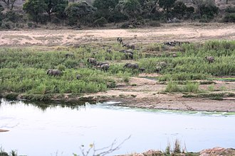 Crocodile River (Mpumalanga) - Image: Crocodile river from Marloth Park