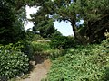 Cruickshank gardens.jpg