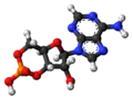 Cyclic-adenosine-monophosphate-3D-balls-2.png