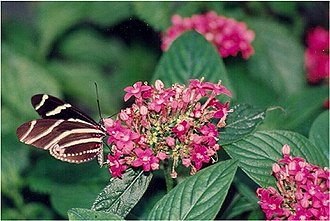 Cypress Gardens - Image: Cypress Gardens butterfly and flowers