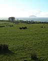 Damp Grazing Land - geograph.org.uk - 354842.jpg