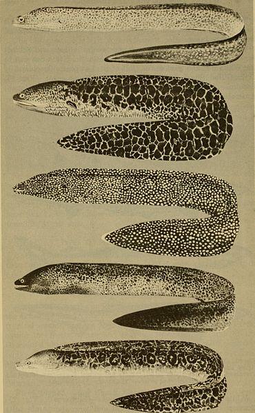 File:Dangerous marine animals (1959) (20805863426).jpg