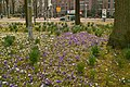 Dapperbuurt, Amsterdam, Netherlands - panoramio (4).jpg