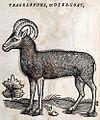Deer-Goat.jpg