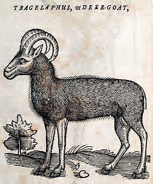 Tragelaphini - This is a woodcut is of the tragelaph from the book, The History of Four-footed Beasts and Serpents by Edward Topsell.
