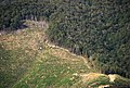 Deforestation NZ TasmanWestCoast 3 MWegmann.jpg