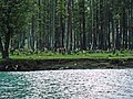 Dense forest beside Mahodand Lake.jpg