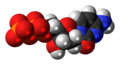 Deoxycytidine diphosphate anion 3D spacefill.png