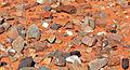 DesertStones.jpg