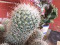 Desert Cactus 01.jpg