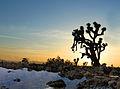 Desert Oasis (14182074104).jpg