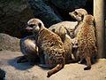 Deutliche Warnung nicht zu stören Tiergarten Worms 2011.JPG