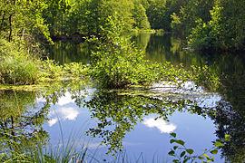 Deutschland Mecklenburg-Vorpommern NSG Großes Moor bei Darze Spiegelung Foto Ralf Ottmann.jpg