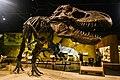 Dinosaur (30194430594).jpg