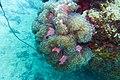 Diving Ko Tao, Thailand 1528.jpg