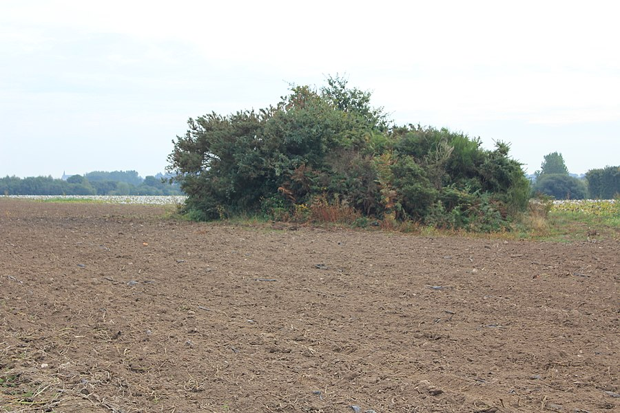 Dolmen de Nelhouët sous la végétation (entretient inexistant depuis plusieurs années) vue depuis le nord-ouest