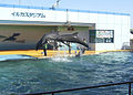 Dolphins @Minami Chita Beach Land.jpg