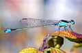 Dragonfly 2015-05-09.png