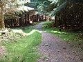 Drove Road path above Upper Stewarton - geograph.org.uk - 1368986.jpg