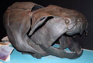 Skull roof - Dermal armour in Dunkleosteus, a Placoderm.