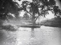 ETH-BIB-Bäume und Kanus am Ufer des Nigers bei Gao-Tschadseeflug 1930-31-LBS MH02-08-0517.tif