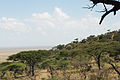 Eastern Serengeti 2012 05 31 2843 (7522636762).jpg