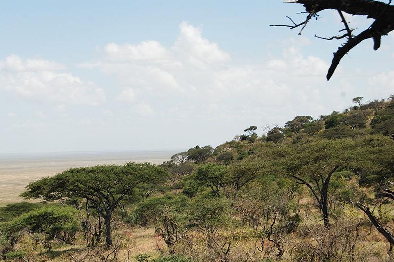 File:Eastern Serengeti 2012 05 31 2843 (7522636762).jpg