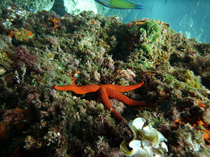 Cartagena, Spain - Coral reefs in Cartagena