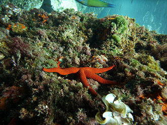 Cartagena, Spain - Coral reefs in Cartagena