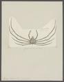 Egeria longipes - - Print - Iconographia Zoologica - Special Collections University of Amsterdam - UBAINV0274 095 15 0005.tif