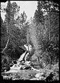 El barranc de Batisielles enmig d'un bosc.jpeg