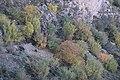 El otoño en Mariola.jpg