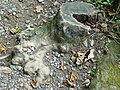 Elephant's Foot tree stump. - geograph.org.uk - 577186.jpg