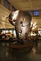 Elephant Göteborgs Naturhistoriska museum.jpg