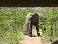 Elephant monitoring (6987576515).jpg