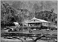 Emerald Hours in New Zealand (1906) · Lowth · 236.jpg