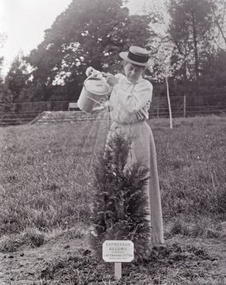 Emily Blathwayt - Emily Blathwayt watering a tree in 1909 at Eagle House