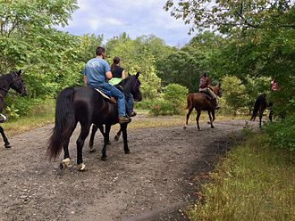 Bluff Point State Park - Equestrians on the Groton X-Town Trail in Bluff Point State Park and Coastal Reserve.