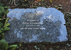 Erica pyramidalis - memorial stone from its extinction - Cape Town.jpg