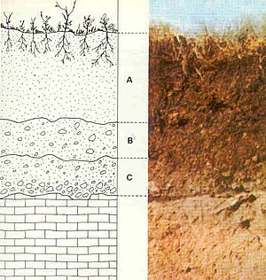 Laterite - Soil layers, from soil down to bedrock: A represents soil; B represents laterite, a regolith; C represents saprolite, a less-weathered regolith; below C is bedrock