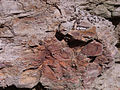 Exposed sedimentary rock Chatswood.JPG