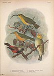 Extinct birds - an attempt to unite in one volume a short account of those birds which have become extinct in historical times - that is, within the last six or seven hundred years - to which are (14565861319).jpg