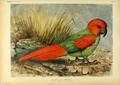 Extinctbirds1907 P8 Necropsittacus borbonicus0297.png