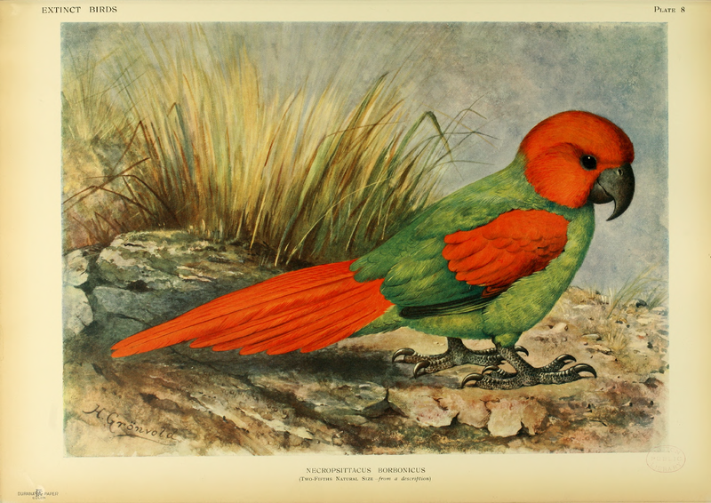 http://upload.wikimedia.org/wikipedia/commons/thumb/d/d3/Extinctbirds1907_P8_Necropsittacus_borbonicus0297.png/800px-Extinctbirds1907_P8_Necropsittacus_borbonicus0297.png