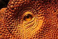Eye of a dino (from the rubber reconstruction of course!) (20563138910).jpg