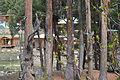 Fairy Meadows Nanga Parbat 19.JPG
