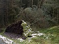 Fallen tree - geograph.org.uk - 739587.jpg