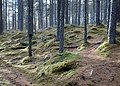 Falls of Bruar woodlands with moss mounds, Blair Atholl, Perth and Kinross.jpg