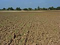 Farmland, Odiham - geograph.org.uk - 956287.jpg