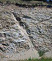 Fault in Archean gneiss & Cretaceous granodiorite (Norris South roadcut, Madison County, Montana, USA) 2 (31675249148).jpg